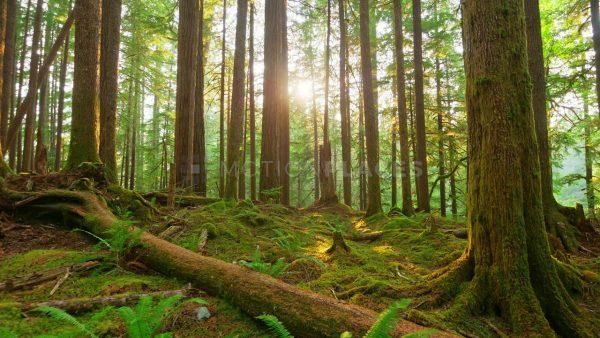 Skovrejsning gjort på den rigtige måde